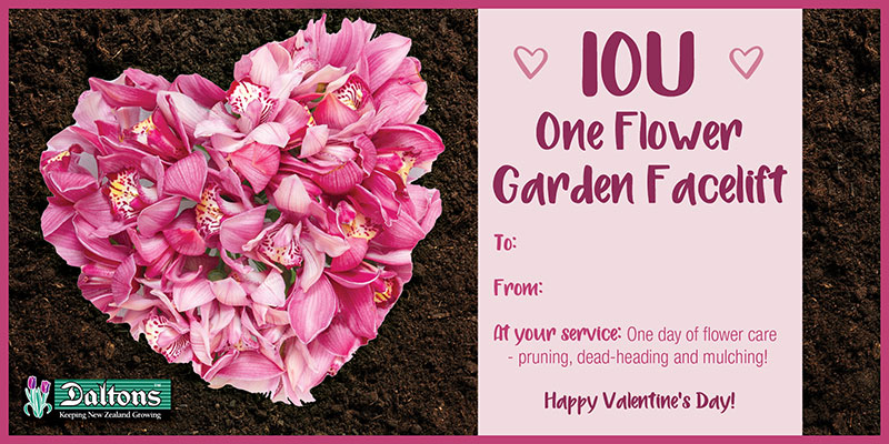 IOU One Flower Garden Facelift