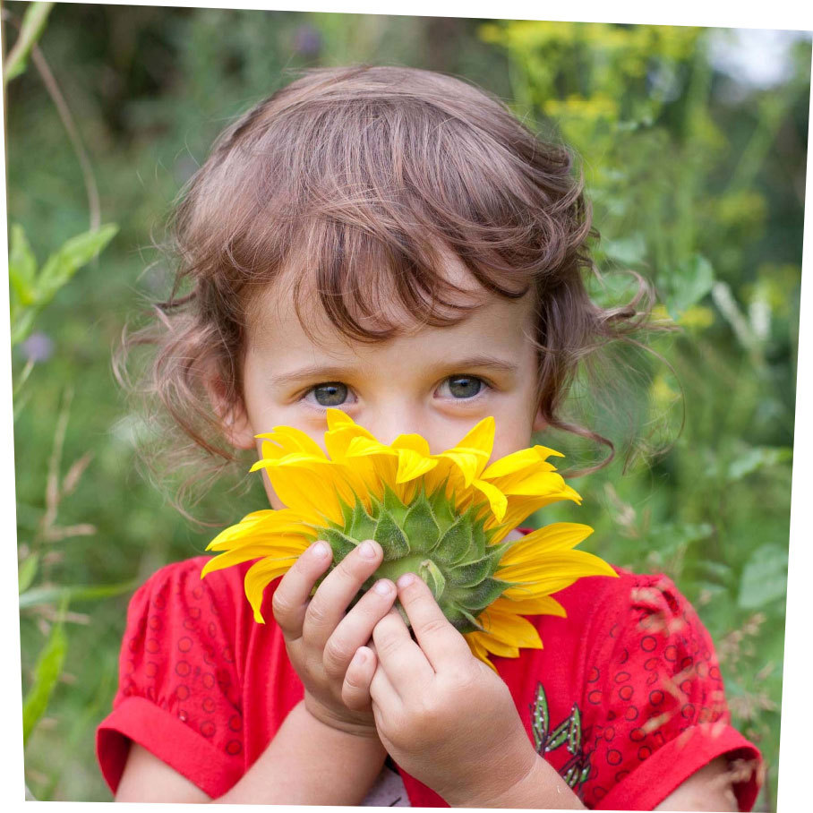 Young boy holding a sunflower to his nose