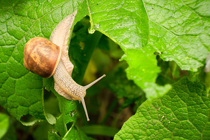 Snail iS473940132XL.jpg