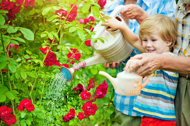 Boy Watering Can iS25736330S.jpg