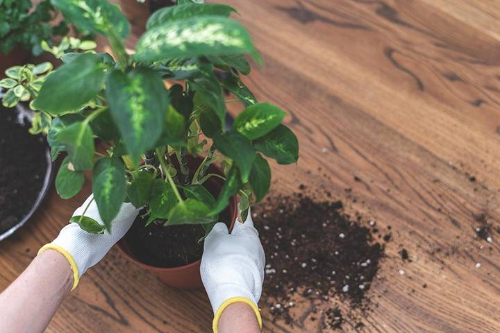 Planting indoor Pot iS1157952499L.jpg