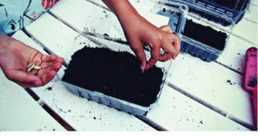Strawberry carton seed starter.jpg