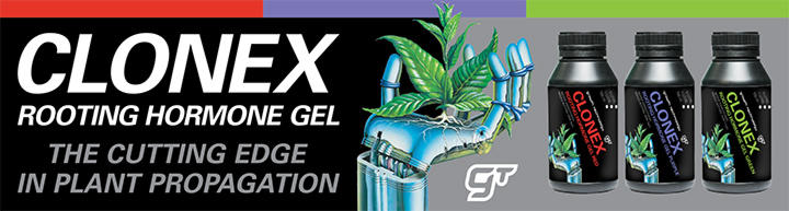 clonex rooting hormone gel