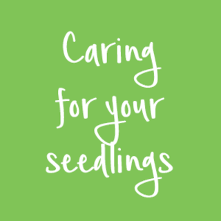Caring for your seedlings