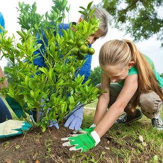 Family planting tree iS21426738_XXXL.jpg