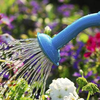 Watering flowers iS5388289_L.jpg