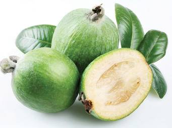 Feijoa iS11401019M web.jpg