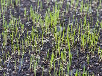 Lawn Sowing iS 520322795ML sml.jpg