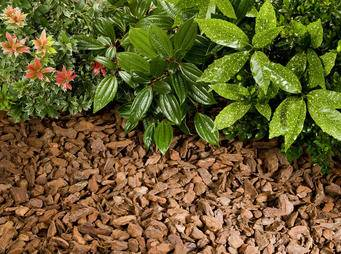 Bark with plants