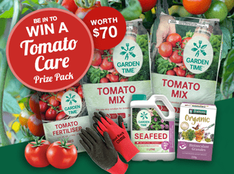 Tomato Competition Link Block 1120.png