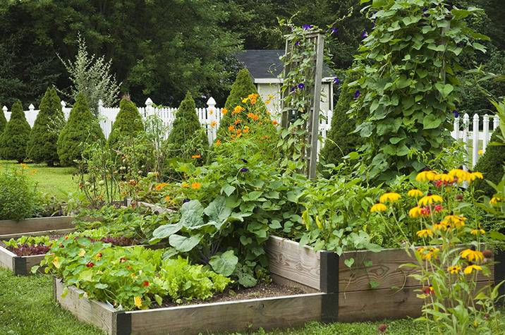 Backyard vegetable garden iS530306691XXL.jpg